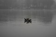 Lac de Genval 20090413 © Eric de Séjournet (10).JPG